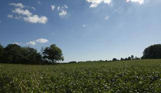 farm field and blue sky